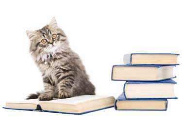 Cat sits on a book