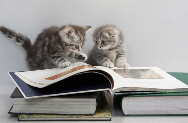 Cats play with book